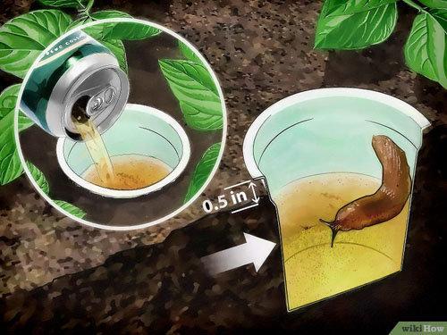 diet-tru-oc-sen-trong-vuon-rau-chi-bang-chai-nuoc-coca-4