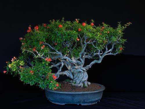 12-chau-cay-bonsai-co-tuoi-doi-tu-30-den-gan-300-nam-khien-ai-nhin-cung-tram-tro-1