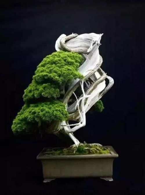 12-chau-cay-bonsai-co-tuoi-doi-tu-30-den-gan-300-nam-khien-ai-nhin-cung-tram-tro-11