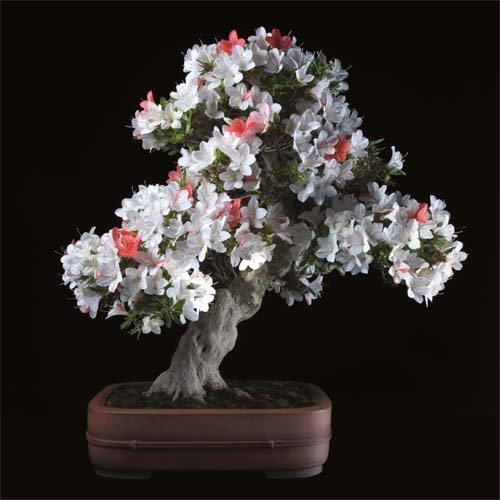 12-chau-cay-bonsai-co-tuoi-doi-tu-30-den-gan-300-nam-khien-ai-nhin-cung-tram-tro-5