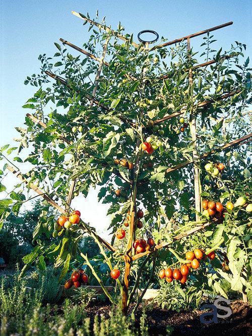 15 kiểu Giàn Cà Chua tham khảo trước khi bắt tay vào trồng tại nhà - Vườn Rau Phố