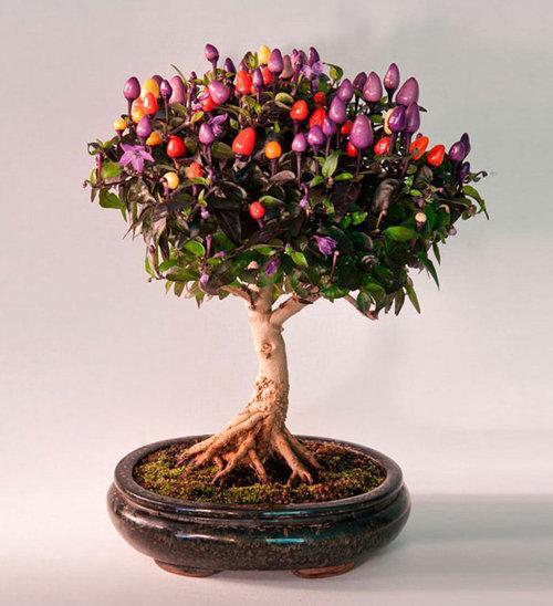 10-chau-bonsai-cay-trai-mini-sieu-dep-dung-trang-tri-nha-dip-tet-3