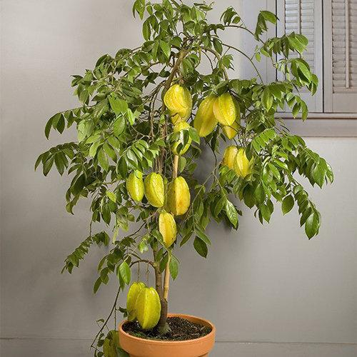 10-chau-bonsai-cay-trai-mini-sieu-dep-dung-trang-tri-nha-dip-tet-6