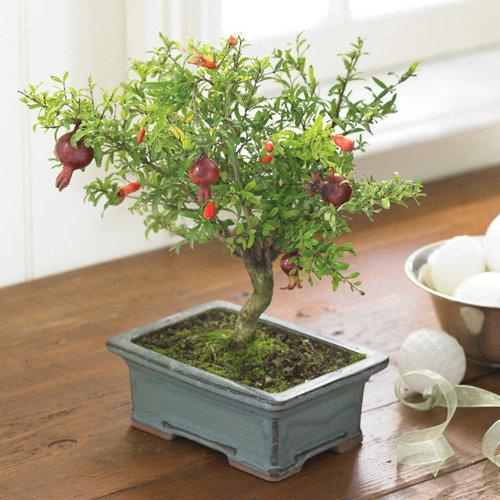 10-chau-bonsai-cay-trai-mini-sieu-dep-dung-trang-tri-nha-dip-tet-7