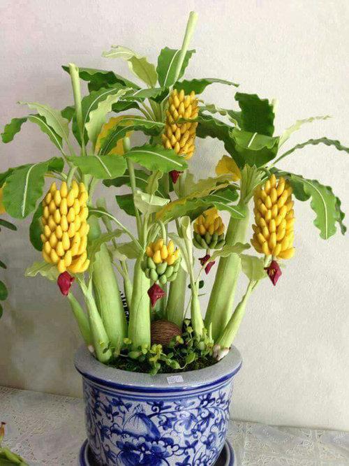 10-chau-bonsai-cay-trai-mini-sieu-dep-dung-trang-tri-nha-dip-tet-9