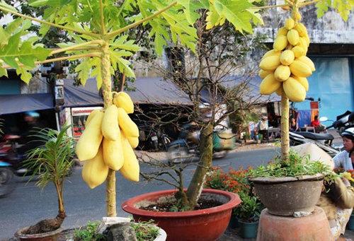 10-loai-cay-an-qua-cuc-hop-trong-chau-bonsai-3