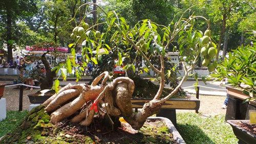 10-loai-cay-an-qua-cuc-hop-trong-chau-bonsai-6