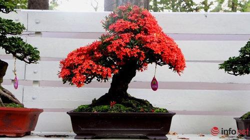 chiem-nguong-10-chau-bonsai-hoa-sieu-dep-choi-tet-5