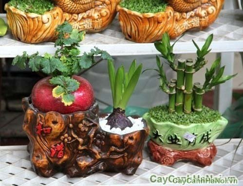bonsai-cu-cai-do-len-doi-cay-canh-dip-tet-sap-den-9