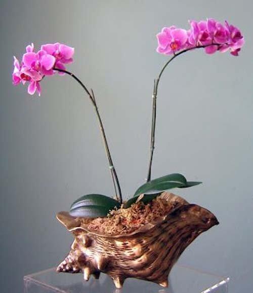 ngam-hoa-lan-bonsai-mini-sieu-dep-trang-tri-nha-dip-tet-1