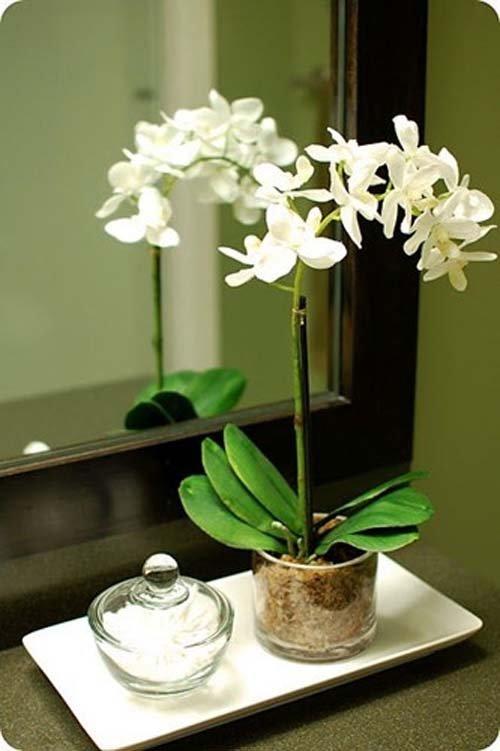 ngam-hoa-lan-bonsai-mini-sieu-dep-trang-tri-nha-dip-tet-10