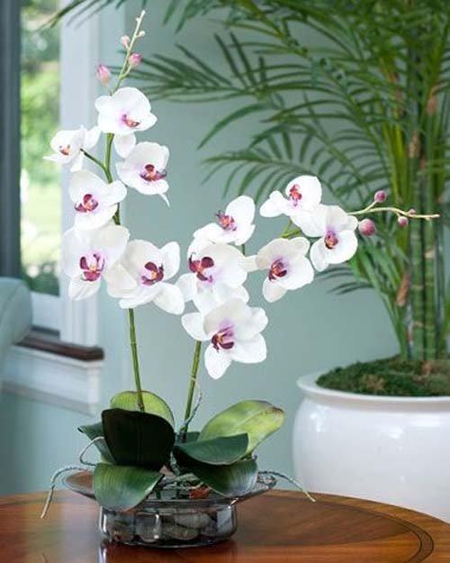 ngam-hoa-lan-bonsai-mini-sieu-dep-trang-tri-nha-dip-tet-11