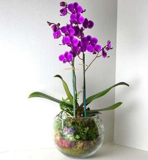 ngam-hoa-lan-bonsai-mini-sieu-dep-trang-tri-nha-dip-tet-12