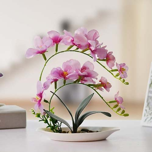 ngam-hoa-lan-bonsai-mini-sieu-dep-trang-tri-nha-dip-tet-13