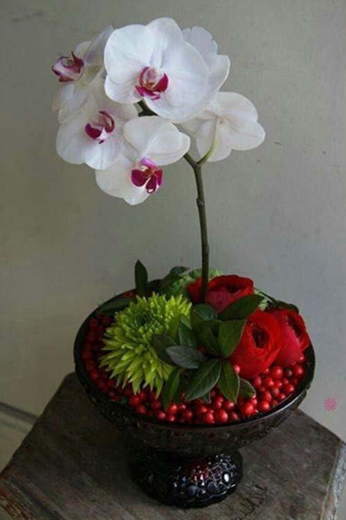 ngam-hoa-lan-bonsai-mini-sieu-dep-trang-tri-nha-dip-tet-14