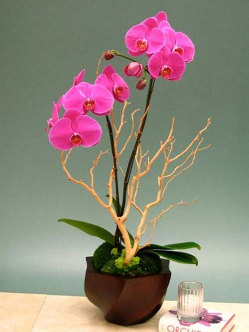 ngam-hoa-lan-bonsai-mini-sieu-dep-trang-tri-nha-dip-tet-15