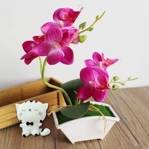 ngam-hoa-lan-bonsai-mini-sieu-dep-trang-tri-nha-dip-tet-2