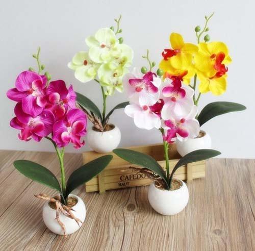 ngam-hoa-lan-bonsai-mini-sieu-dep-trang-tri-nha-dip-tet-3