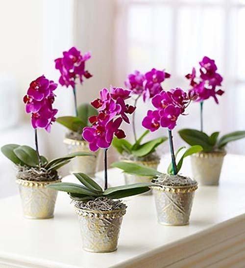 ngam-hoa-lan-bonsai-mini-sieu-dep-trang-tri-nha-dip-tet-4