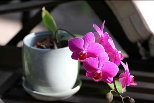 ngam-hoa-lan-bonsai-mini-sieu-dep-trang-tri-nha-dip-tet-5