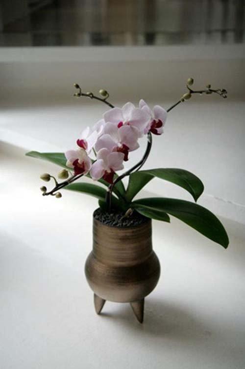 ngam-hoa-lan-bonsai-mini-sieu-dep-trang-tri-nha-dip-tet-7