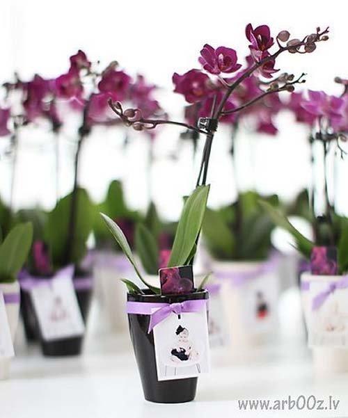 ngam-hoa-lan-bonsai-mini-sieu-dep-trang-tri-nha-dip-tet-8