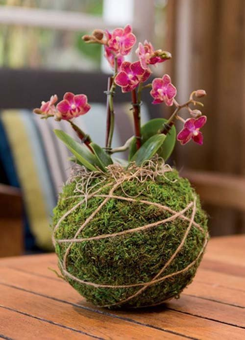 ngam-hoa-lan-bonsai-mini-sieu-dep-trang-tri-nha-dip-tet-9