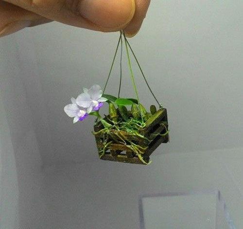 dan-ha-thanh-phat-sot-voi-bonsai-phong-lan-nho-nhu-ngon-tay-11