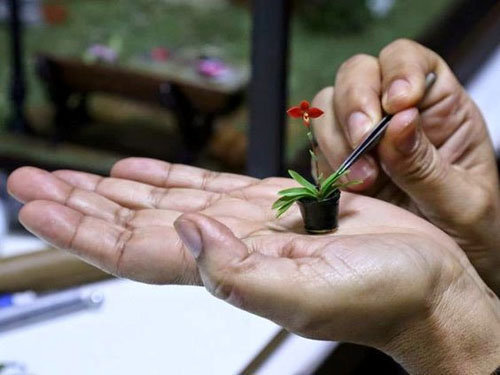 dan-ha-thanh-phat-sot-voi-bonsai-phong-lan-nho-nhu-ngon-tay-12