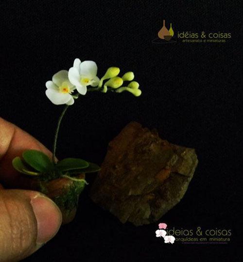 dan-ha-thanh-phat-sot-voi-bonsai-phong-lan-nho-nhu-ngon-tay-5