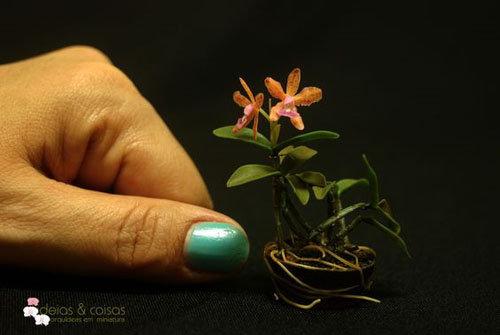 dan-ha-thanh-phat-sot-voi-bonsai-phong-lan-nho-nhu-ngon-tay-8