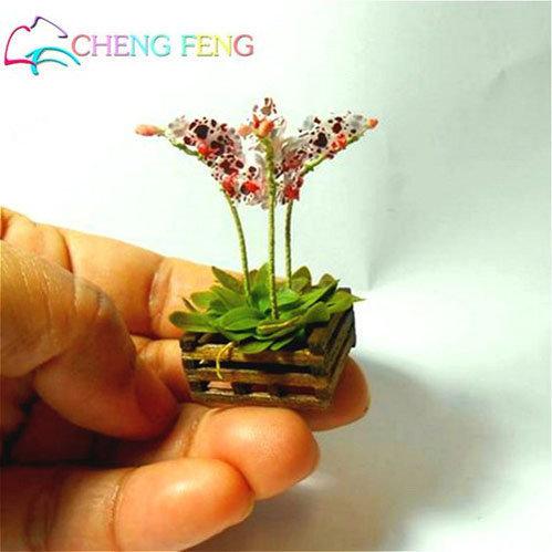 dan-ha-thanh-phat-sot-voi-bonsai-phong-lan-nho-nhu-ngon-tay-9