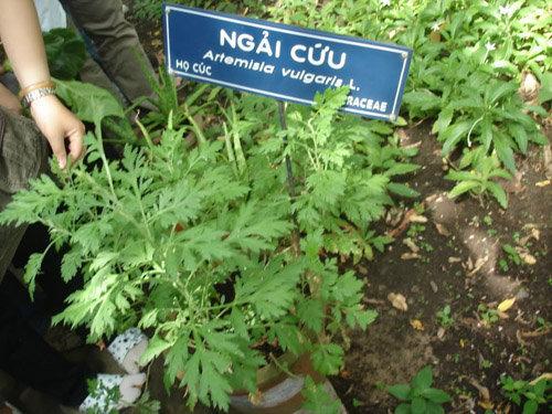 diem-danh-6-loai-rau-xanh-trong-quanh-nam-tai-nha-pho-1