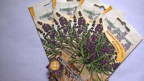 hoa-lavender-qua-dep-ma-thom-lai-duoi-duoc-muoi-toi-gi-khong-tu-trong-vai-chau-tai-nha-11