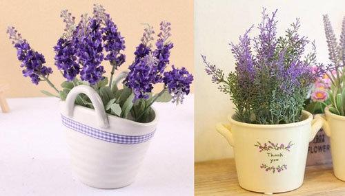 hoa-lavender-qua-dep-ma-thom-lai-duoi-duoc-muoi-toi-gi-khong-tu-trong-vai-chau-tai-nha-3