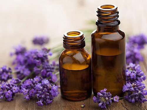 hoa-lavender-qua-dep-ma-thom-lai-duoi-duoc-muoi-toi-gi-khong-tu-trong-vai-chau-tai-nha-9